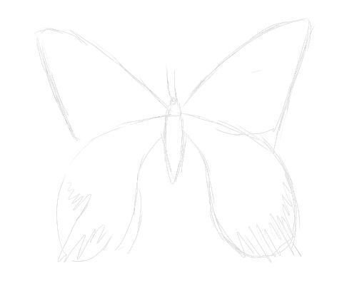 Number Names Worksheets butterfly trace : Butterfly Sketch Tutorial