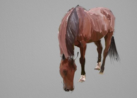Horse Painting Step by Step 8