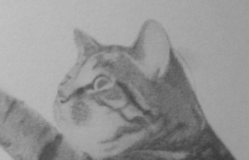 cat drawing close up