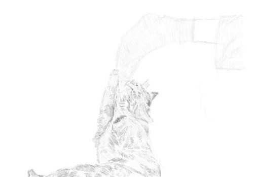 cat sketches in pencil 23