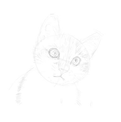 cat sketches in pencil 7