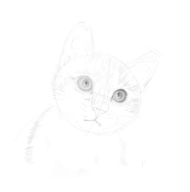 cat sketches in pencil 8