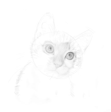 cat sketches in pencil 9