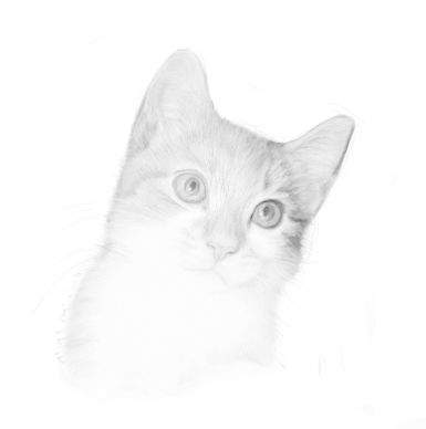 cat sketches in pencil 10