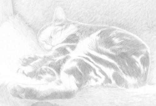 cat sketches tutorial in pencil