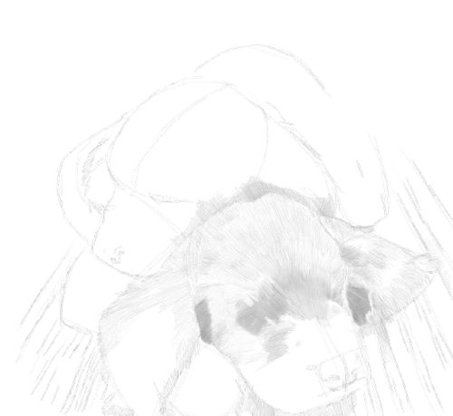 Dog Sketches in pencil 19