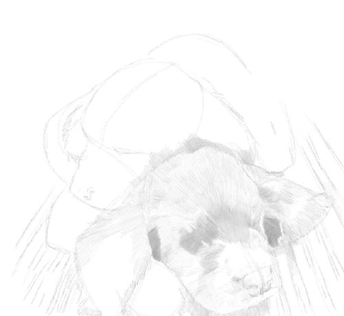 Dog Sketches in pencil 20