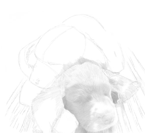 Dog Sketches in pencil 21