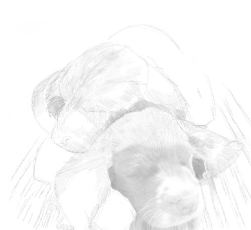 Dog Sketches in pencil 23