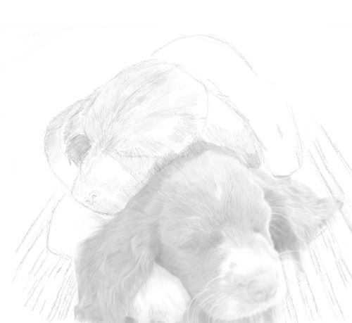 Dog Sketches in pencil 24