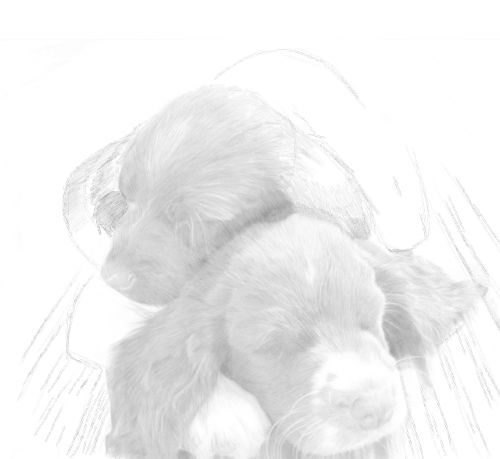 Dog Sketches in pencil 25
