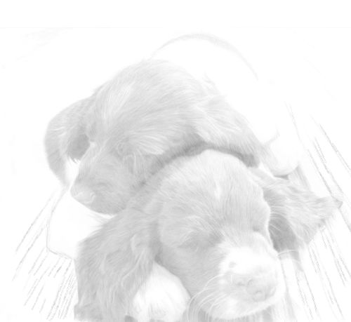 Dog Sketches in pencil 26