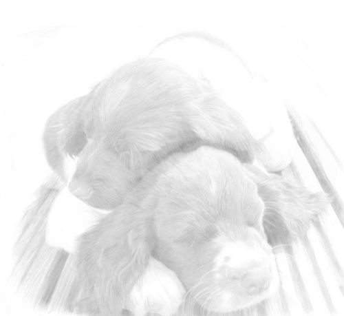 Dog Sketches in pencil 27