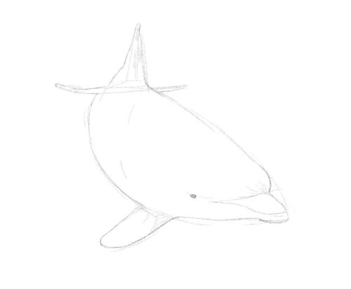 Dolphin line drawing 12