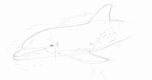 Dolphin line drawing 6