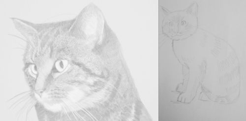 Two drawings of cats in pencil