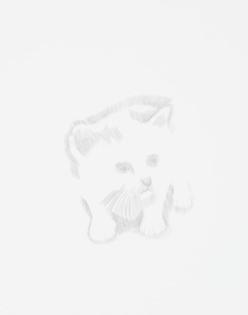 kitten drawing in pencil