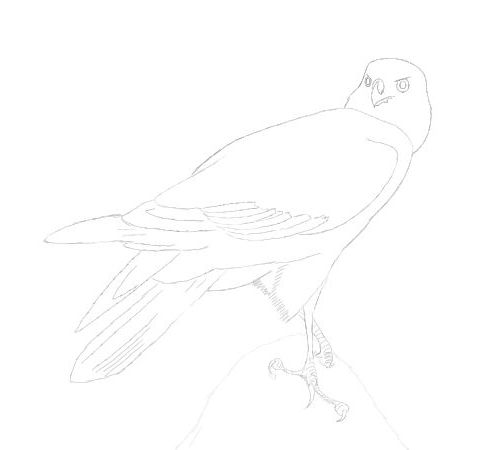 standing eagle drawing in pencil