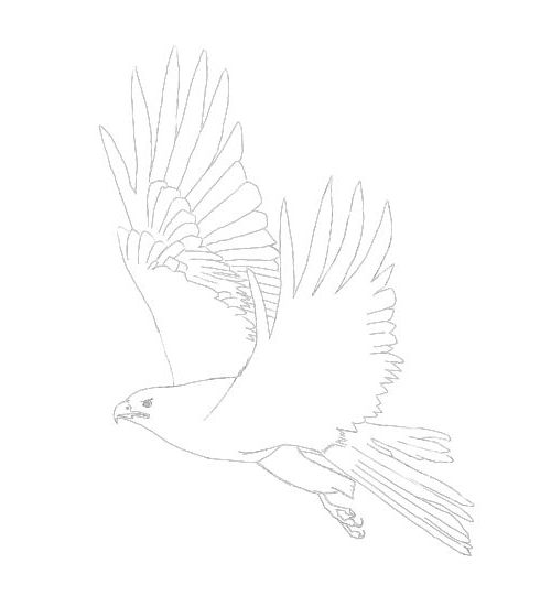 eagle in flight line drawing