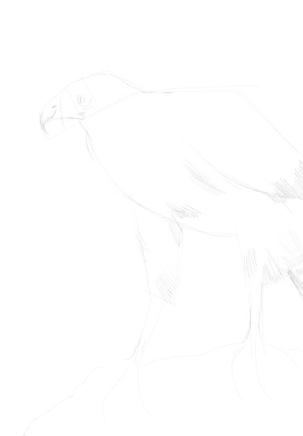eagle sketch in pencil 11