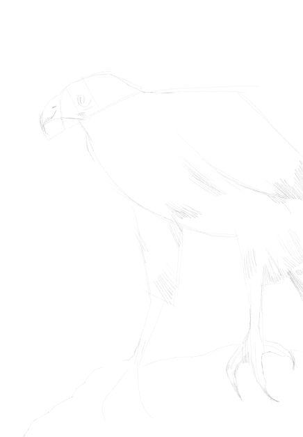 eagle sketch in pencil 13