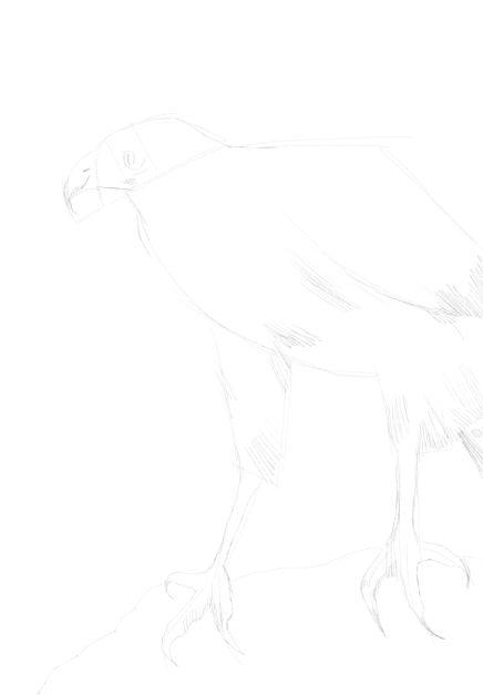 eagle sketch in pencil 15