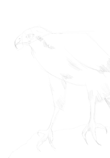eagle sketch in pencil 16