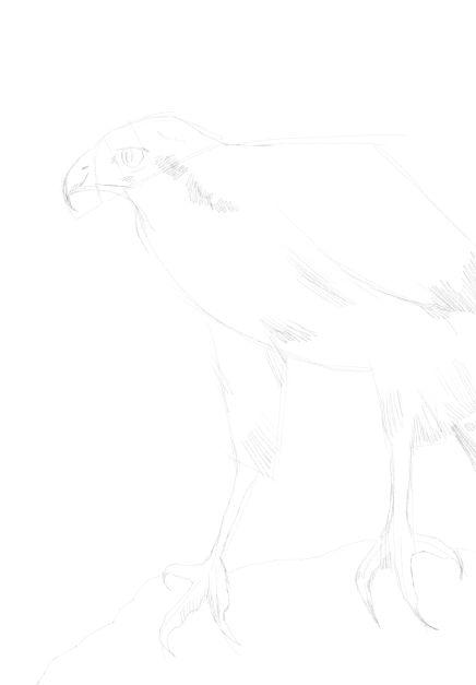 eagle sketch in pencil 16