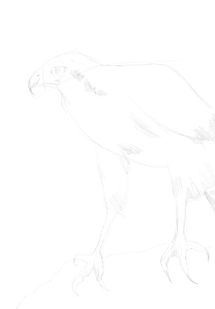 eagle sketch in pencil 17