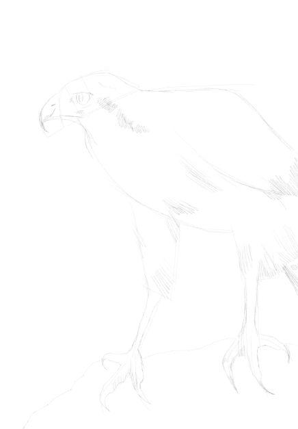 eagle sketch in pencil 17