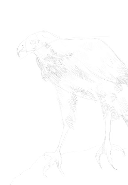 eagle sketch in pencil 18