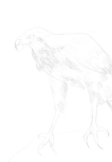 eagle sketch in pencil 18