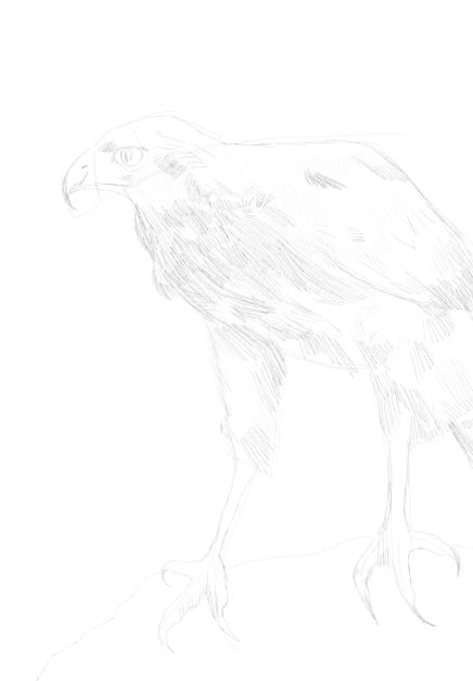 eagle sketch in pencil 19