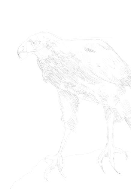 eagle sketch in pencil 19