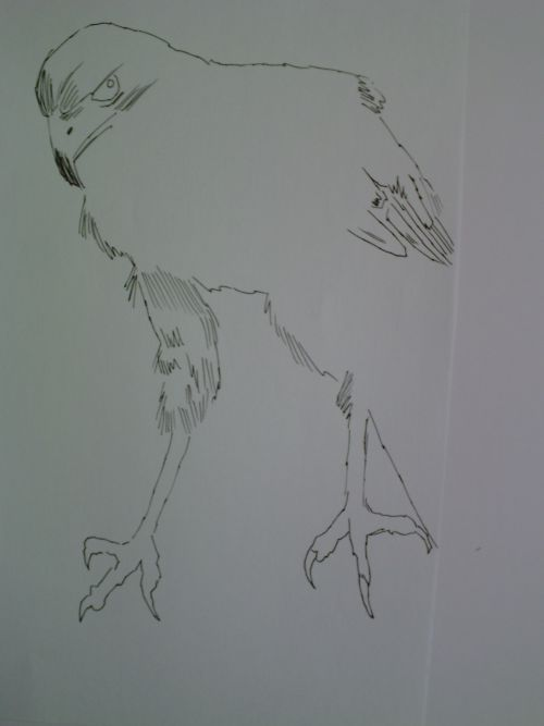 pen and ink eagle drawings 10