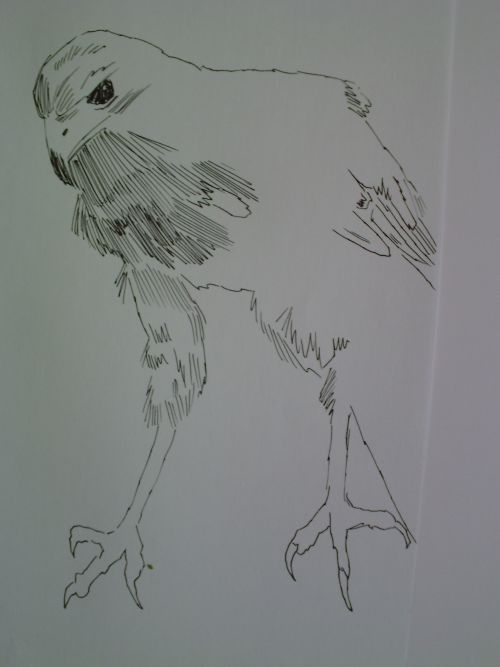 pen and ink eagle drawings 11