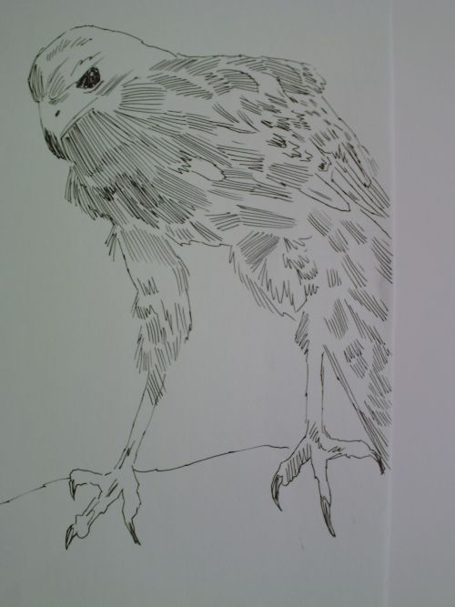 pen and ink eagle drawings 12