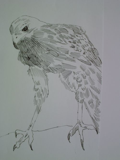 pen and ink eagle drawings 13