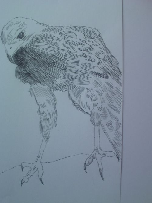 pen and ink eagle drawings 15