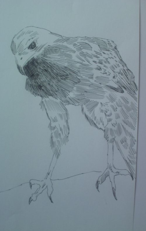pen and ink eagle drawings 16