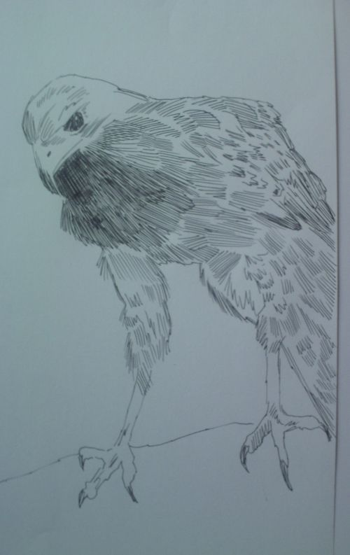 pen and ink eagle drawings 17