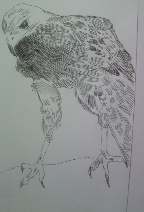 pen and ink eagle drawings 18