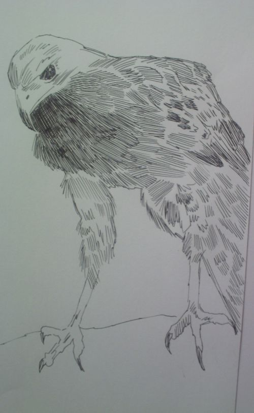 pen and ink eagle drawings 19