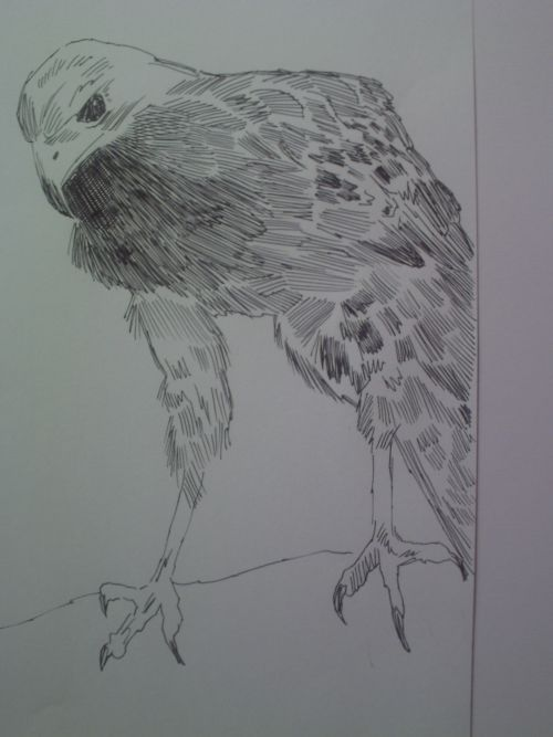 pen and ink eagle drawings 20