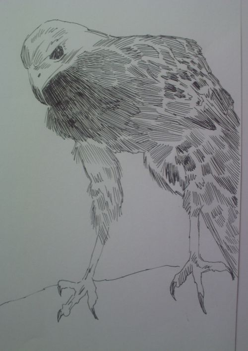 pen and ink eagle drawings 21