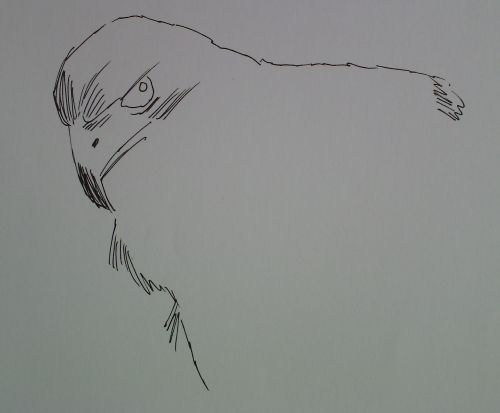 pen and ink eagle drawings 6