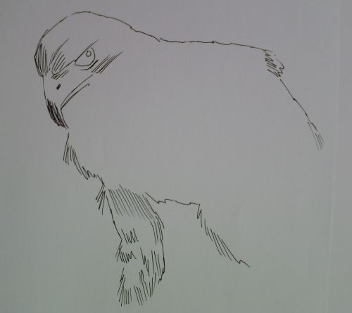 pen and ink eagle drawings 7
