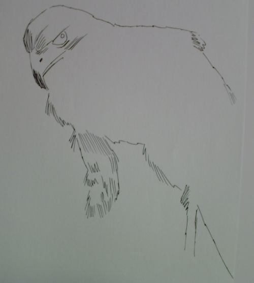 pen and ink eagle drawings 8