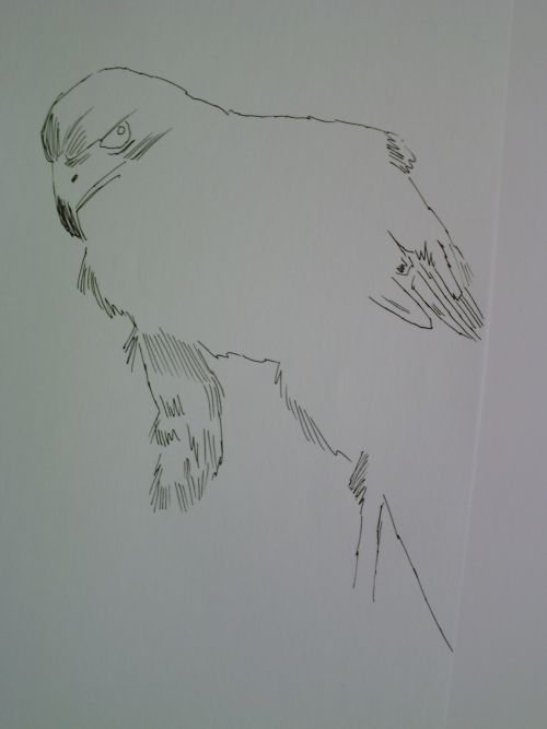 pen and ink eagle drawings 9