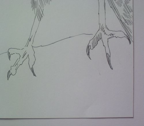 pen and ink eagle drawings close up of talons